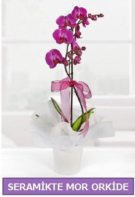 Seramik içerisinde birinci kalite tek dallı mor orkide  Niğde kaliteli taze ve ucuz çiçekler