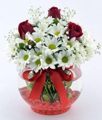 Fanusta 3 Gül ve Papatya  Niğde çiçek , çiçekçi , çiçekçilik