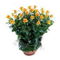 Niğde çiçekçiler  10 adet sari gül tanzim cam yada mika vazoda çiçek