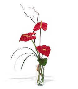 Niğde çiçek satışı  cam yada mika Vazoda 3 adet  antoryum