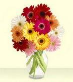 Niğde çiçek mağazası , çiçekçi adresleri  cam yada mika vazoda 15 özel gerbera