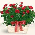 Niğde kaliteli taze ve ucuz çiçekler  11 adet kirmizi gül sepette