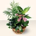 Niğde İnternetten çiçek siparişi  5 adet canli çiçek sepette