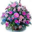 karisik mevsim kir çiçekleri  Niğde güvenli kaliteli hızlı çiçek