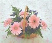 gerbera çiçeklerinde sepet   Niğde yurtiçi ve yurtdışı çiçek siparişi
