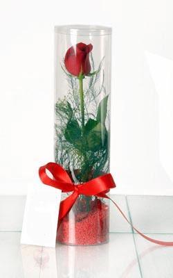 Niğde yurtiçi ve yurtdışı çiçek siparişi  Silindir vazoda tek kirmizi gül