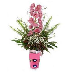 Niğde çiçek gönderme  cam yada mika vazo içerisinde tek dal orkide çiçegi