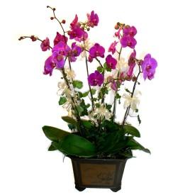 Niğde internetten çiçek satışı  4 adet orkide çiçegi