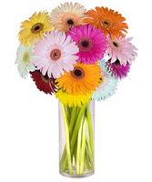 Niğde hediye çiçek yolla  Farkli renklerde 15 adet gerbera çiçegi
