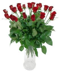 Niğde çiçek yolla , çiçek gönder , çiçekçi   11 adet kimizi gülün ihtisami cam yada mika vazo modeli