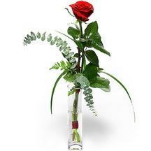 Niğde çiçek siparişi vermek  Sana deger veriyorum bir adet gül cam yada mika vazoda