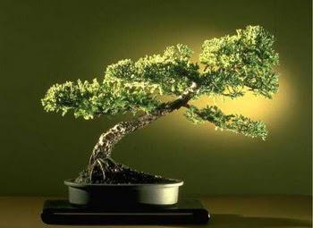 ithal bonsai saksi çiçegi  Niğde çiçekçi telefonları