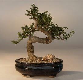ithal bonsai saksi çiçegi  Niğde çiçek siparişi vermek