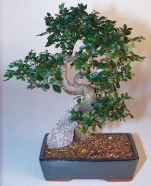 Niğde güvenli kaliteli hızlı çiçek  ithal bonsai saksi çiçegi  Niğde çiçek satışı