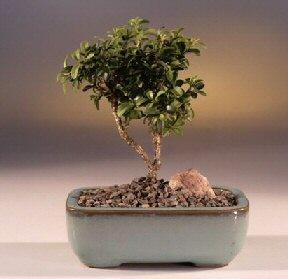Niğde yurtiçi ve yurtdışı çiçek siparişi  ithal bonsai saksi çiçegi  Niğde çiçek , çiçekçi , çiçekçilik