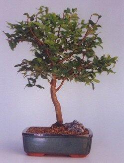 Niğde çiçek yolla  ithal bonsai saksi çiçegi  Niğde online çiçek gönderme sipariş