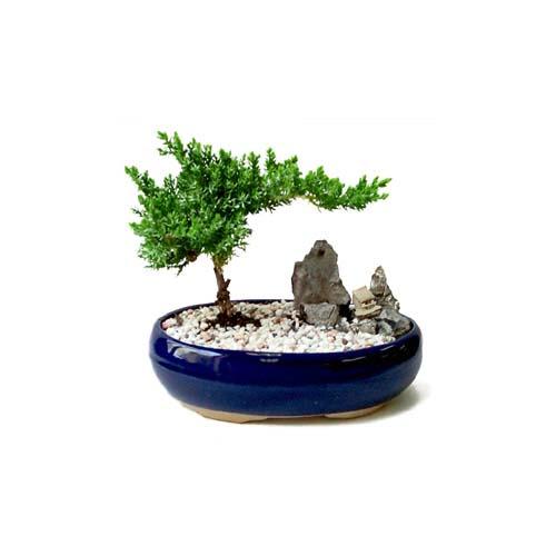 ithal bonsai saksi çiçegi  Niğde online çiçekçi , çiçek siparişi
