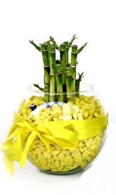 cam fanus içerisinde bambo  Niğde çiçek , çiçekçi , çiçekçilik