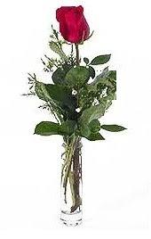 Vazo içerisinde 1 adet kirmizi gül  Niğde çiçekçiler