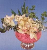 Niğde 14 şubat sevgililer günü çiçek  Dal orkide kalite bir hediye