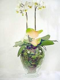 Niğde İnternetten çiçek siparişi  Cam yada mika vazoda özel orkideler