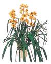Niğde ucuz çiçek gönder  Orchiede ithal büyük boy saksi