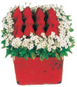 Niğde online çiçekçi , çiçek siparişi  Kare cam yada mika içinde kirmizi güller - anneler günü seçimi özel çiçek