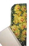 Niğde online çiçekçi , çiçek siparişi  Kutu içerisine dal cymbidium orkide
