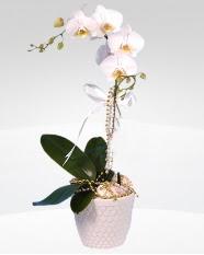 1 dallı orkide saksı çiçeği  Niğde çiçek servisi , çiçekçi adresleri