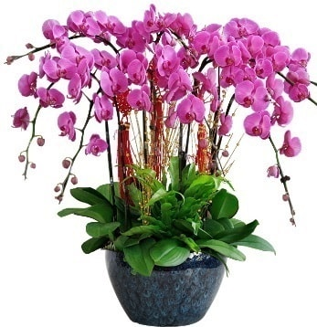 9 dallı mor orkide  Niğde çiçek siparişi vermek