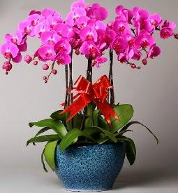 7 dallı mor orkide  Niğde cicekciler , cicek siparisi