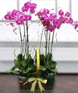 4 dallı mor orkide  Niğde hediye sevgilime hediye çiçek