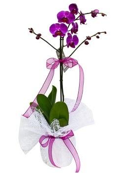 Tek dallı mor orkide  Niğde çiçek yolla , çiçek gönder , çiçekçi