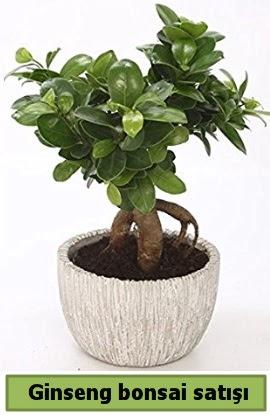 Ginseng bonsai japon ağacı satışı  Niğde çiçek yolla , çiçek gönder , çiçekçi
