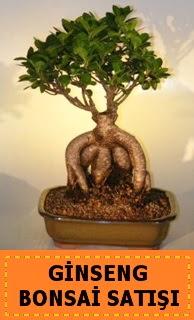 Ginseng bonsai satışı japon ağacı  Niğde internetten çiçek satışı