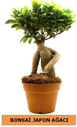 Bonsai japon ağacı satışı  Niğde uluslararası çiçek gönderme