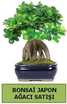 Bonsai japon ağacı satışı  Niğde İnternetten çiçek siparişi