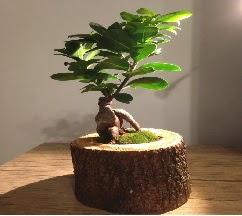 Doğal kütükte Bonsai japon ağacı satışı  Niğde çiçek , çiçekçi , çiçekçilik