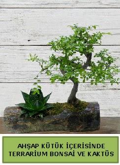 Ahşap kütük bonsai kaktüs teraryum  Niğde hediye çiçek yolla