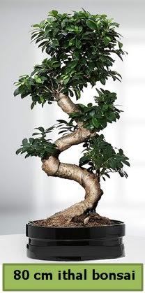 80 cm özel saksıda bonsai bitkisi  Niğde çiçek yolla , çiçek gönder , çiçekçi