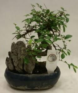 İthal 1.ci kalite bonsai japon ağacı  Niğde İnternetten çiçek siparişi