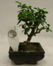 Küçük minyatür bonsai japon ağacı  Niğde online çiçekçi , çiçek siparişi
