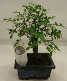 Minyatür ithal japon ağacı bonsai bitkisi  Niğde İnternetten çiçek siparişi