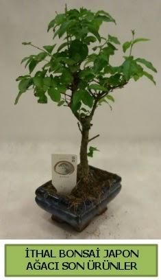 İthal bonsai japon ağacı bitkisi  Niğde cicek , cicekci