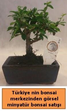 Japon ağacı bonsai satışı ithal görsel  Niğde yurtiçi ve yurtdışı çiçek siparişi