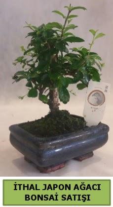 İthal japon ağacı bonsai bitkisi satışı  Niğde çiçek yolla , çiçek gönder , çiçekçi