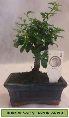 Minyatür bonsai ağacı satışı  Niğde online çiçekçi , çiçek siparişi