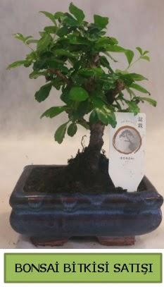 Bonsai ithal görsel minyatür japon ağacı  Niğde çiçek yolla