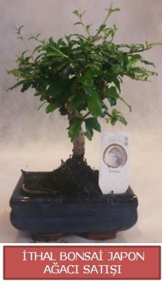 İthal küçük boy minyatür bonsai ağaç bitkisi  Niğde çiçek yolla , çiçek gönder , çiçekçi