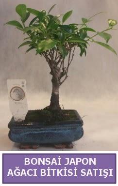 İthal Bonsai japon ağacı bitkisi satışı  Niğde kaliteli taze ve ucuz çiçekler